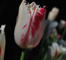 Tulip Flowers  Sticker