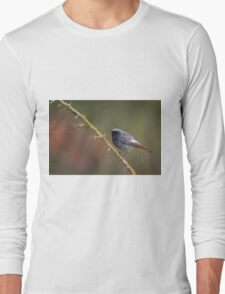 Black Redstart (Phoenicurus ochruros) perched on a branch Long Sleeve T-Shirt