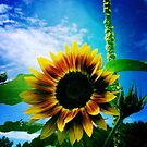 Sunflower by OneDayOneImage Photography