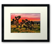 Joshua Trees  Framed Print