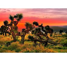 Joshua Trees  Photographic Print