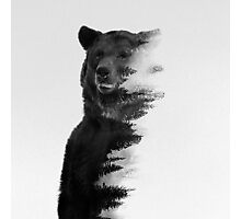 bear graphic nature photography Photographic Print