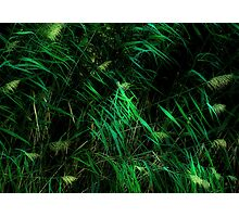Sunburst On Meadow Grasses Photographic Print