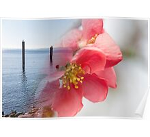 landscape lake and flower Poster