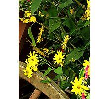 Wagon Full Of Flowers Photographic Print