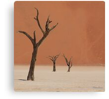 Dead valley in Namibia Canvas Print