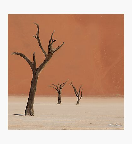 Dead valley in Namibia Photographic Print