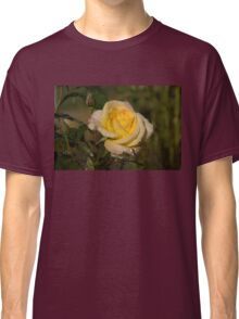 Golden Yellow Sparkles - a Fresh Rose With Dewdrops Classic T-Shirt