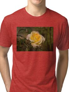 Golden Yellow Sparkles - a Fresh Rose With Dewdrops Tri-blend T-Shirt