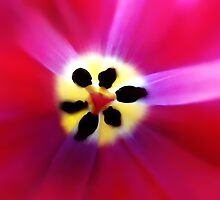 Tulip Vivid Floral Abstract by Menega  Sabidussi