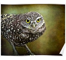 The Burrowing Owl  Poster