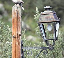 Street Lamp by John Thurgood