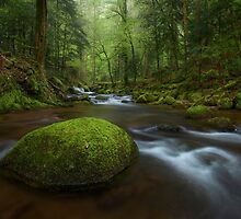 German Rainforest by Michael Breitung