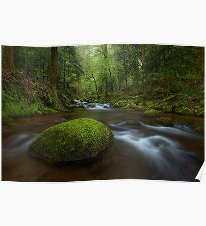 German Rainforest Poster