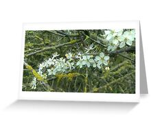 Decayed Blossom Greeting Card