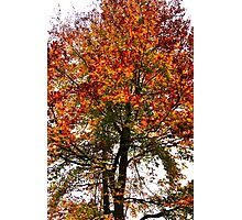 Autumn! Photographic Print