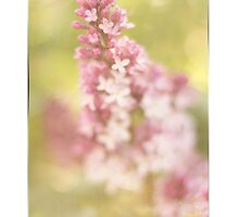 Lilac Thank You Card by Tracy Friesen