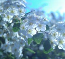 Spring Flower Collection 1 Sticker