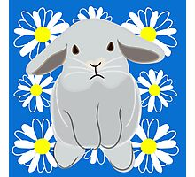 Grey Bunny & Flowers Photographic Print