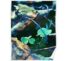 Dead Leaves and Clovers Poster