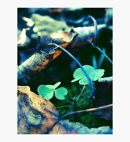 Dead Leaves and Clovers Photographic Print