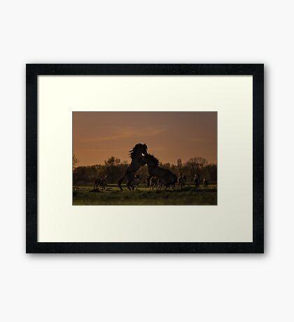 Prancing Framed Print