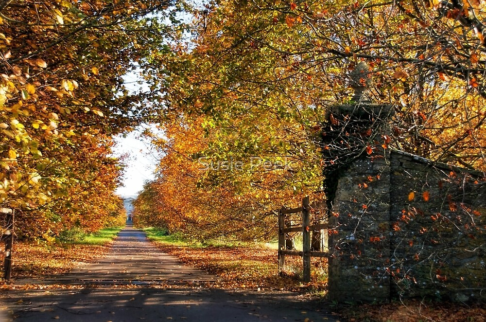 An Autumn Driveway by Susie Peek