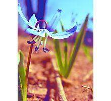 Tiny Blue Wild Flower Photographic Print