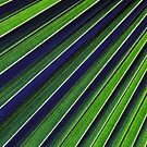 Palm Fronds by James Lady