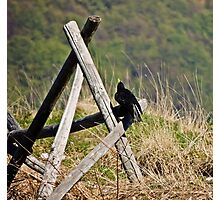 Crow on a fence Photographic Print