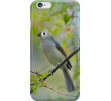 Tufted Titmouse in a Choke Cherry Tree iPhone Case/Skin