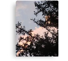 Pine and Sky Canvas Print