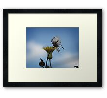 NS Seeds In Blue© Framed Print