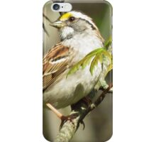 The White-throated Sparrow iPhone Case/Skin