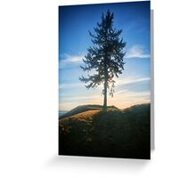Chambers Bay Golf Course Tree at Sunset Greeting Card
