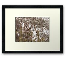 Great Grey Owl in a snow storm Framed Print