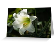 Divine Glow - Illuminated Pure White Easter Lily Greeting Card
