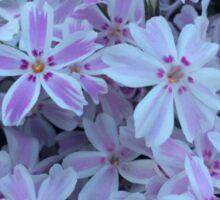 Springing Pink Flowers Sticker