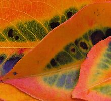 pear fall leaves by ANNABEL   S. ALENTON