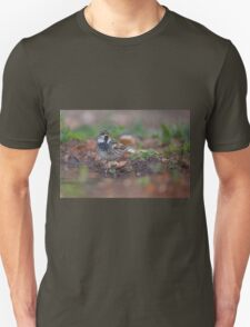 Spanish sparrow or willow sparrow (Passer hispaniolensis)  T-Shirt