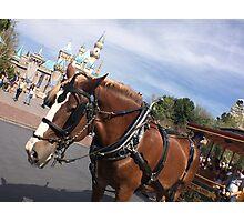 Main Street Ponies Photographic Print