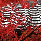 Momiji at Daitoku-ji by Jenny Hall