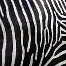 Zebra Patterns in Black and White.... by RichImage