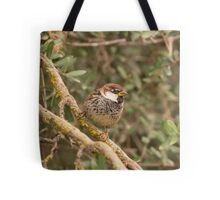 Spanish sparrow or willow sparrow (Passer hispaniolensis)  Tote Bag