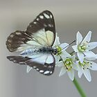 Pretty Flying Things - Moth (4) by Josette Halls