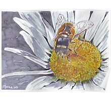 The Hoverfly and the Daisy Poster
