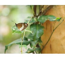 Butterfly on a Leaf Photographic Print