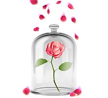 Rose in glass jar Photographic Print