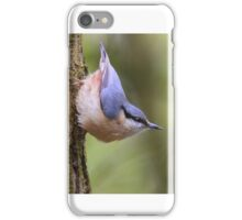 """ Playful Nuthatch "" iPhone Case/Skin"