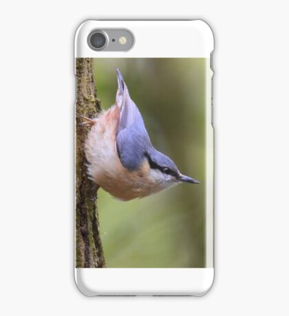 """"""" Playful Nuthatch """" iPhone Case/Skin"""